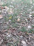 And autumn arrived in the southern hemisphere. Dried leaves fallen on the floor of the square autumn arrived southern hemisphere royalty free stock images