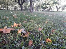 And autumn arrived in the southern hemisphere. Dried leaves fallen on the floor of the square autumn arrived southern hemisphere royalty free stock photo