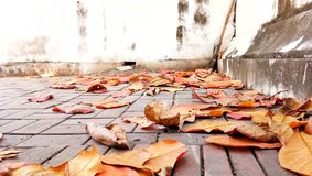 The dried leaves fallen to the brick floor in the autumn. Colorful of leaves in autumn on the ground royalty free stock images