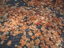 Dried Leaves on Gray Floor Royalty Free Stock Photography