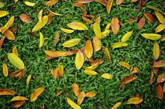 Dried leaves on green sward Royalty Free Stock Images