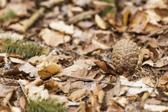 Dried leaves on ground in Autumn Stock Photography