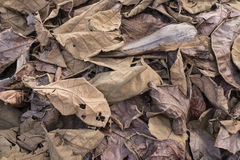 Dried leaves on the ground Royalty Free Stock Images