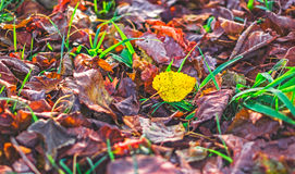 Dried leaves on the ground Stock Photos