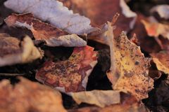 Dried leaves on the ground. Useful background. Autumn season around the corner royalty free stock images