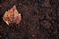Dried leaves on the ground. Useful background. Autumn season around the corner royalty free stock photo
