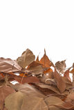 Dried leaves Royalty Free Stock Photo