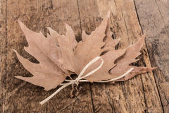 Dried leaves Stock Photography