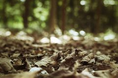 Dried leaves Royalty Free Stock Photos