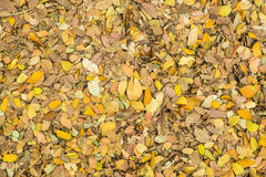 Dried leaves for nature background Royalty Free Stock Image