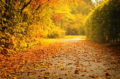 Dried leaves in the park Royalty Free Stock Photos