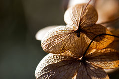 Dried leaves-petals in the sunshine Stock Photography