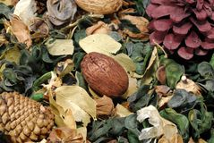 Dried Leaves - Potpourri Stock Images