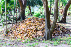 Dried leaves from public park use for organic fertilizer, bio gardening Royalty Free Stock Images