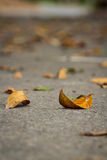 Dried leaves on road Stock Image