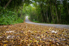 Dried leaves on road with tree tunnel Royalty Free Stock Images