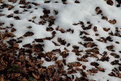 Dried leaves on the snow Royalty Free Stock Photography