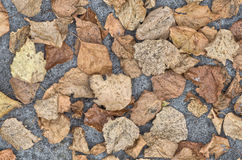 Dried leaves on soil background Royalty Free Stock Photos