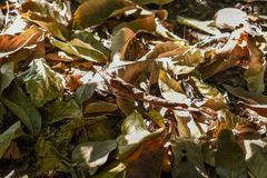Dried leaves on the soil with the sun is shining stock photo