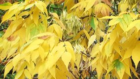 Dried Leaves stock video footage