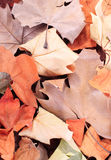 Dried leaves texture Royalty Free Stock Photos