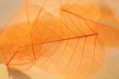 Dried leaves texture. Royalty Free Stock Images