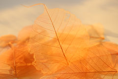 Dried leaves texture. Royalty Free Stock Photos