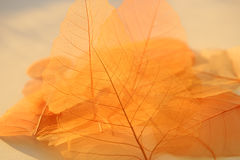 Dried leaves texture. Royalty Free Stock Photography