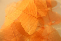 Dried leaves texture. Stock Photography