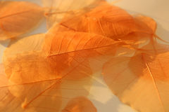 Dried leaves texture. Stock Photo