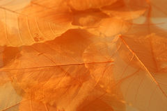 Dried leaves texture. Royalty Free Stock Photo