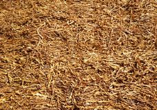 Dried leaves of tobacco Royalty Free Stock Photo