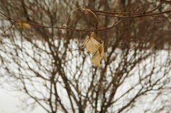 Dried leaves. On the tree for Change Stock Photo
