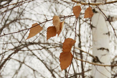 Dried leaves. On the tree for Change Stock Images