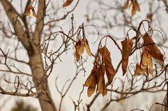 Dried leaves Stock Photos