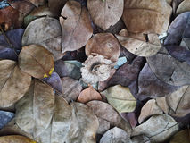 Dried leaves Royalty Free Stock Image