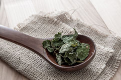 Dried lemon balm. In wooden spoon, close up Royalty Free Stock Image