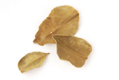 Dried lemon leaves Royalty Free Stock Image