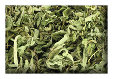 Dried lemon verbena Stock Images
