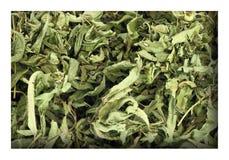 Dried lemon verbena. Close up of dried lemon verbena Stock Images