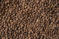 Dried Lentils. Background or brown, dried lentils Royalty Free Stock Photography