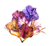 Dried lily petals. Petunia flower Stock Photo
