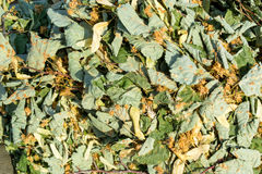 Dried Lime Tree Flowers and Leaves Stock Images