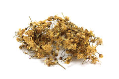 Dried linden blossom Royalty Free Stock Image