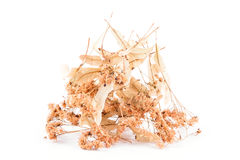 Dried linden flower. On a white background Stock Photos