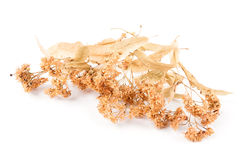 Dried linden flower. On a white background Royalty Free Stock Images
