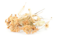 Dried Linden Flowers. Isolated on White Background Stock Image