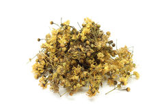 Dried linden flowers Royalty Free Stock Images