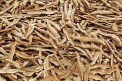 Dried Lingzhi mushroom Stock Images