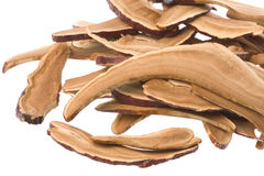 Dried Lingzhi mushrooms Stock Images